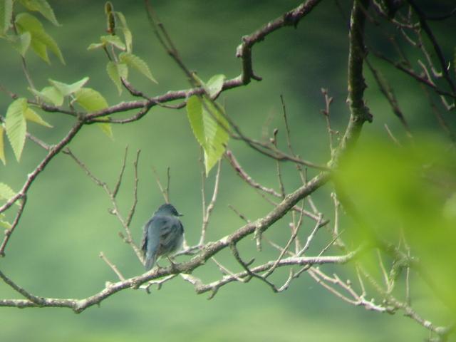 0606-1早起きは三文以上の得!!鳥のさえずりを聞こう