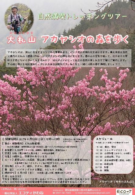s-0423大札山アカヤシオ