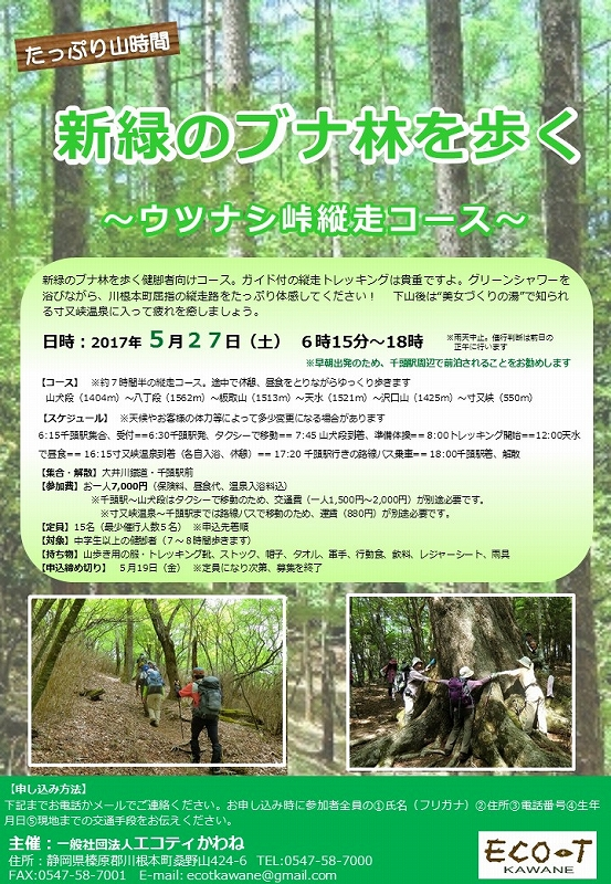 s-0527新緑のブナ林