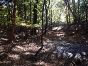 s_ヌタ場の森